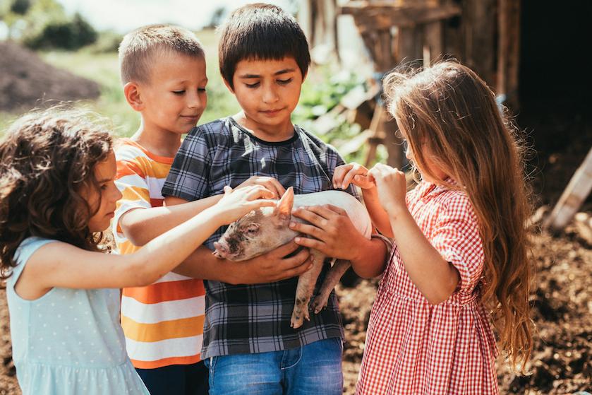 Wéér een vermakelijk kidsuitje terug op de planning: meeste kinderboerderijen bijna weer open