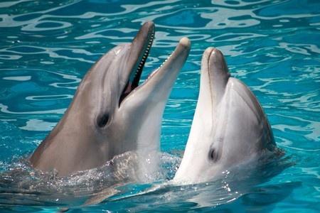 Video: Dolfijn pakt tablet af