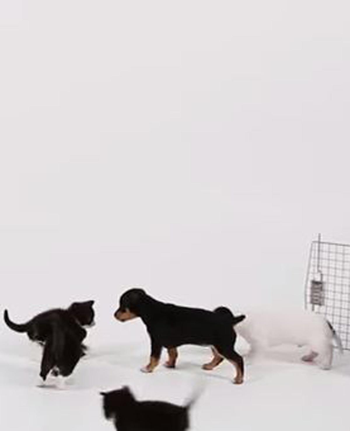Puppy's en kittens ontmoeten elkaar voor de eerste keer