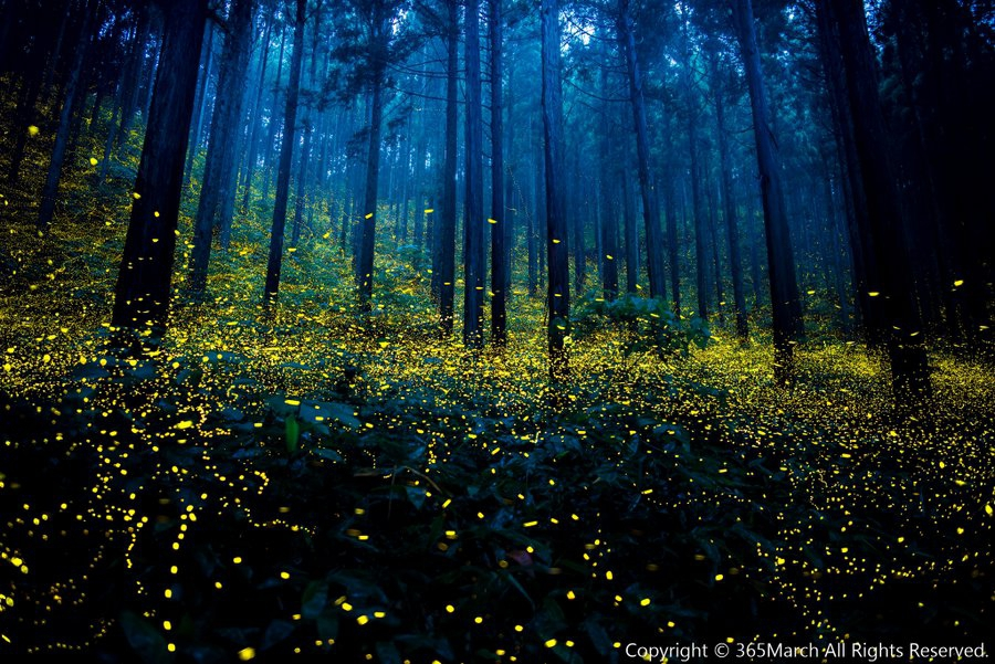 ZIEN! Deze magische foto's van vuurvliegjes in Japan