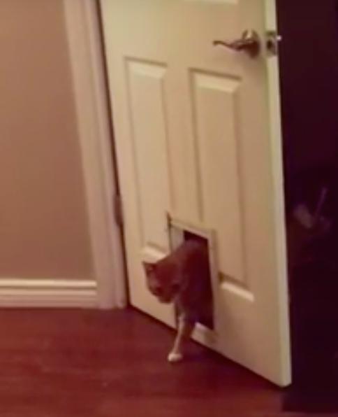 Deze kat gaat niet zomaar door het luikje heen