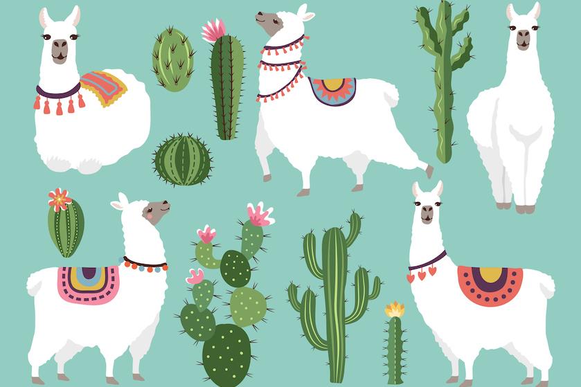 Hebben! Bij Lidl scoor je deze week vetplantjes in een… alpaca-pot