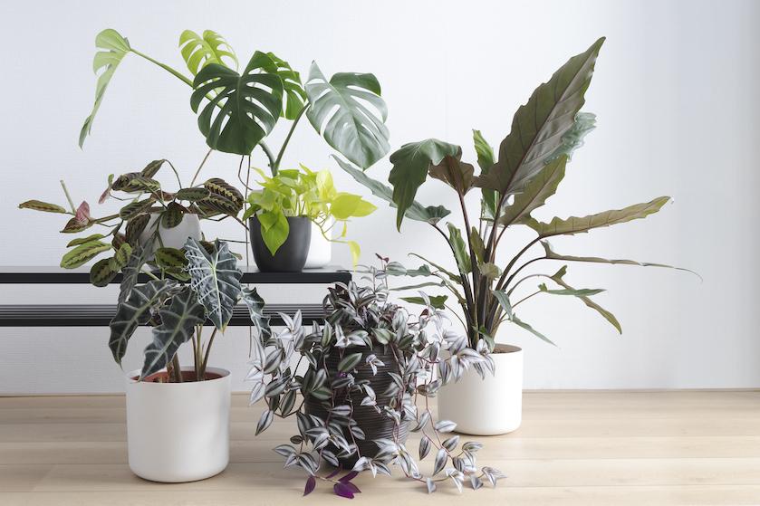 Omgekrulde bladeren aan je plant? Dít kunnen de oorzaken én oplossingen zijn