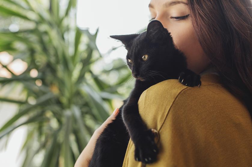 Oppassen geblazen: dít is waarom je moet uitkijken met teken- en vlooienmiddeltjes voor je huisdier