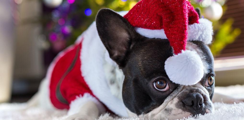 Kerst wordt nu nog leuker met deze feestelijke onesie voor je viervoeter