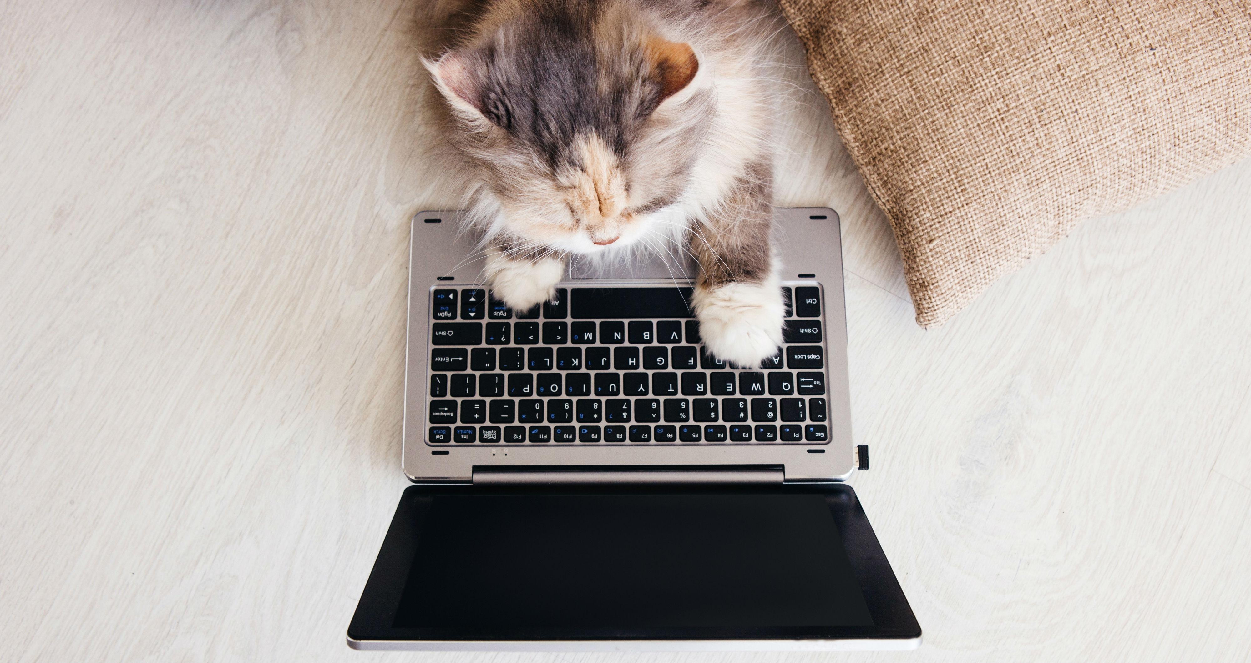 Waarom je kat altijd overal op gaat zitten
