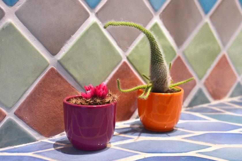 Deze planten zijn ideaal om in de vensterbank te zetten
