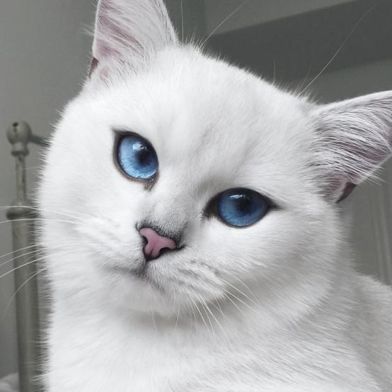 Deze kat heeft wellicht de mooiste ogen ooit