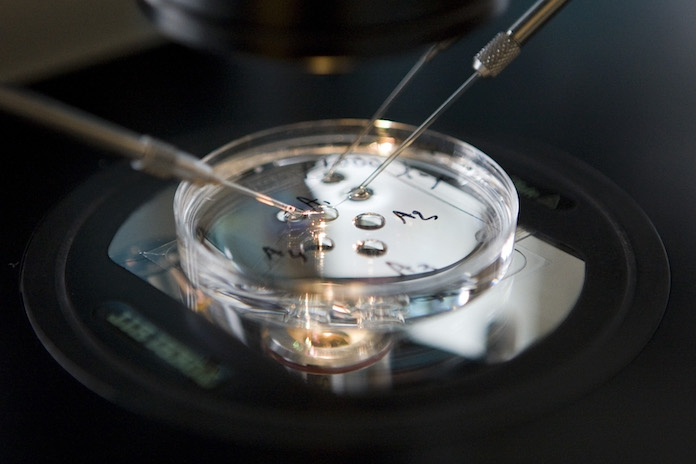 Gezondheidsraad: 'knutselen met embryo's moet kunnen'