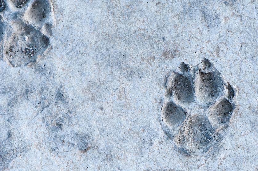 Dag luipaardprint! Déze dierenprint wordt het helemaal dit najaar