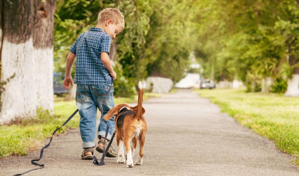 Wil je graag een hond, maar kan het niet? Dit is de oplossing!