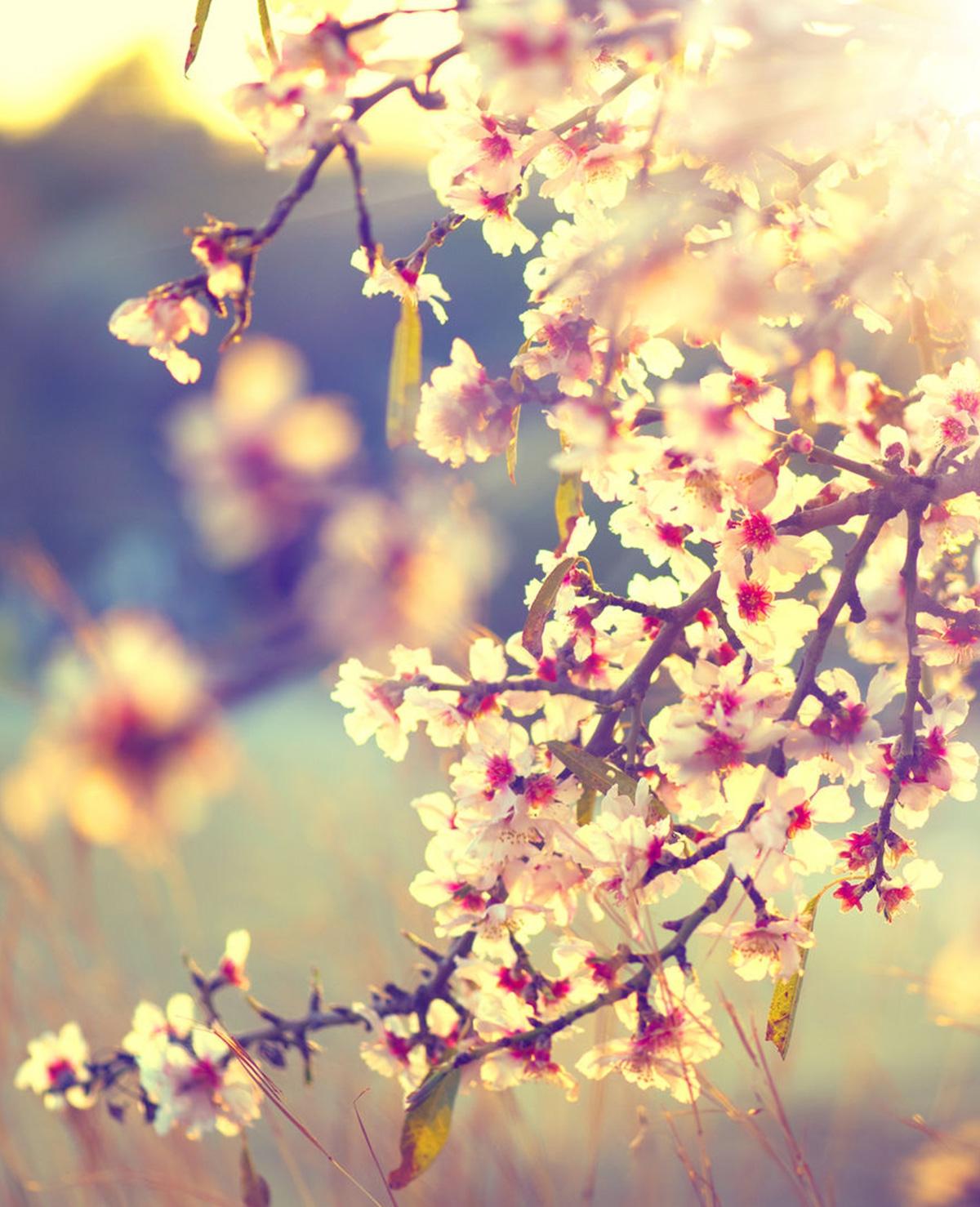 Hoera, lenteweer! (en tips tegen hooikoorts)