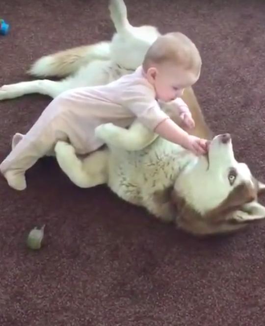 Baby heeft speelmaatje gevonden in Husky