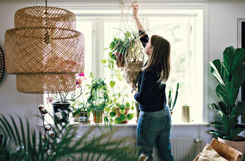 Groeien er plots paddestoelen aan je kamerplant? Dít is de reden