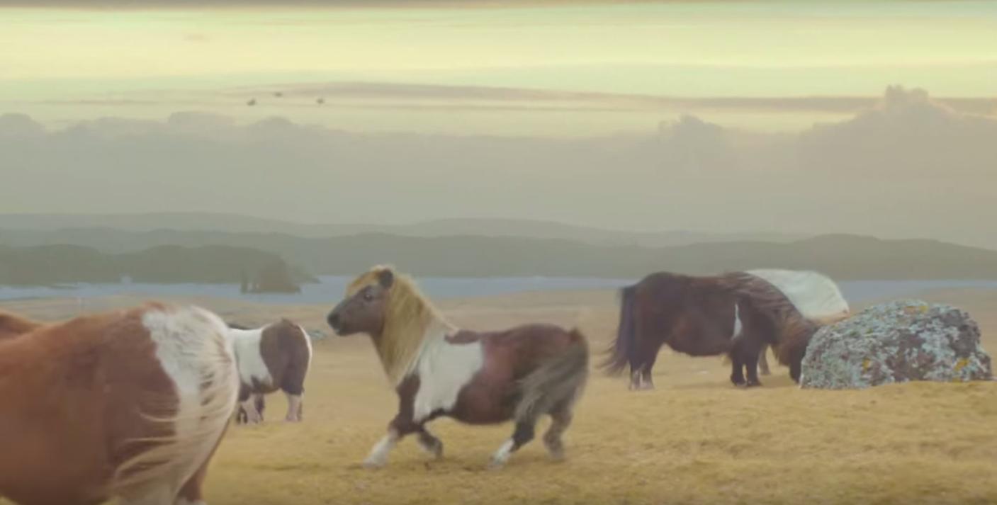 Video: deze moonwalking pony moet je gezien hebben