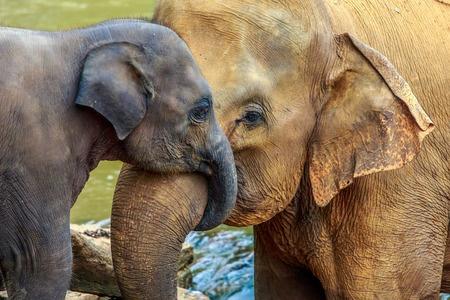 Knuffels van een olifantenbaby
