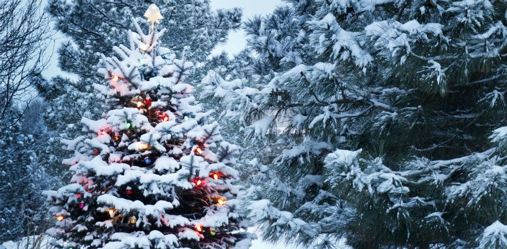 AHA: dit is het beste moment om je kerstboom te kopen