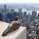 Het stervende vogeltje