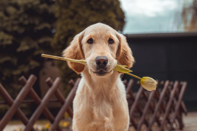 Is het erg dat onze huisdieren elke dag hetzelfde voer eten?