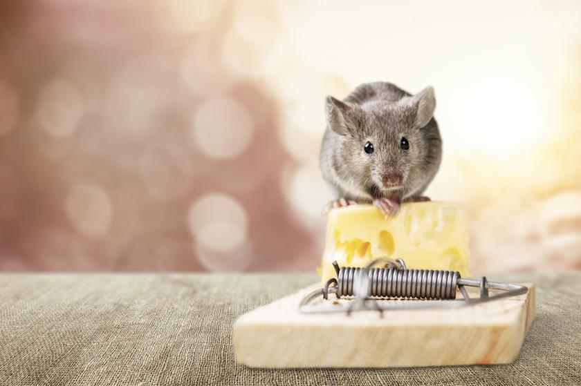 Muizen in huis? Gebruik een theezakje