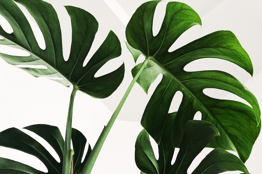 Handig! Deze foto-app is onmisbaar voor iedereen die een ramp is in het verzorgen van planten