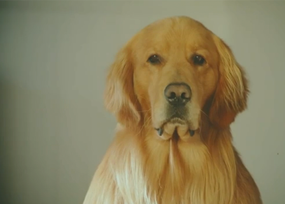 VIDEO: deze reclamespot breekt en verwarmt je hart tegelijkertijd