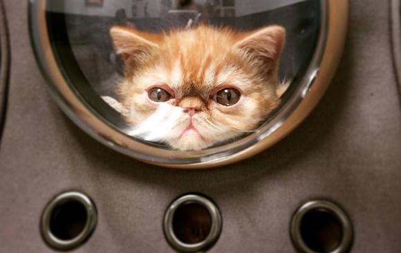 Willen we: altijd en overal je kat mee met deze rugtas