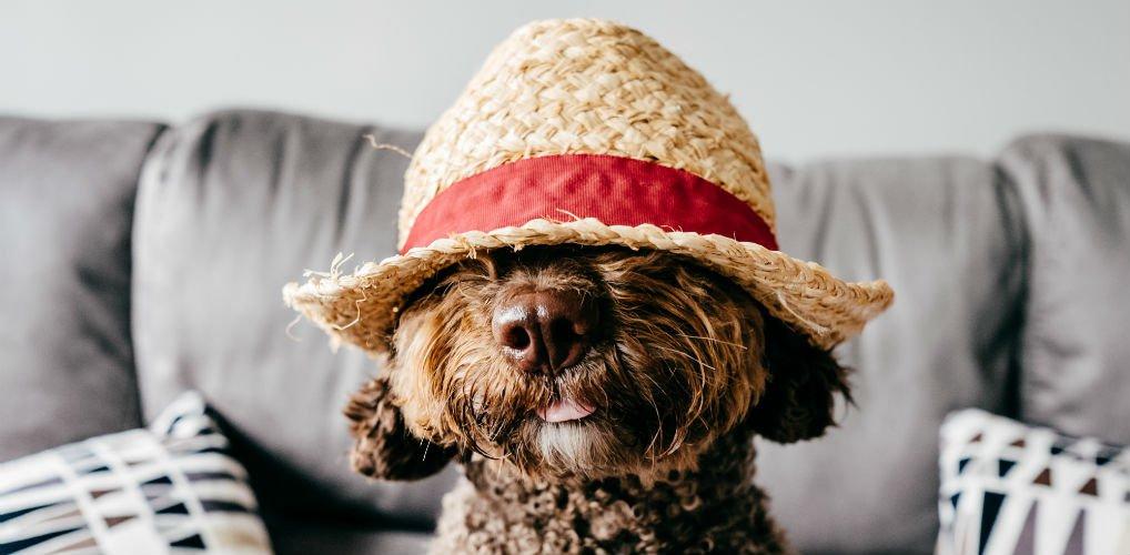 Met deze hoed steelt jouw viervoeter de show deze zomer
