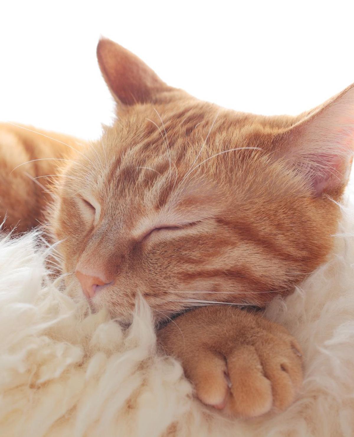 9 levenslessen die je van je kat kunt leren