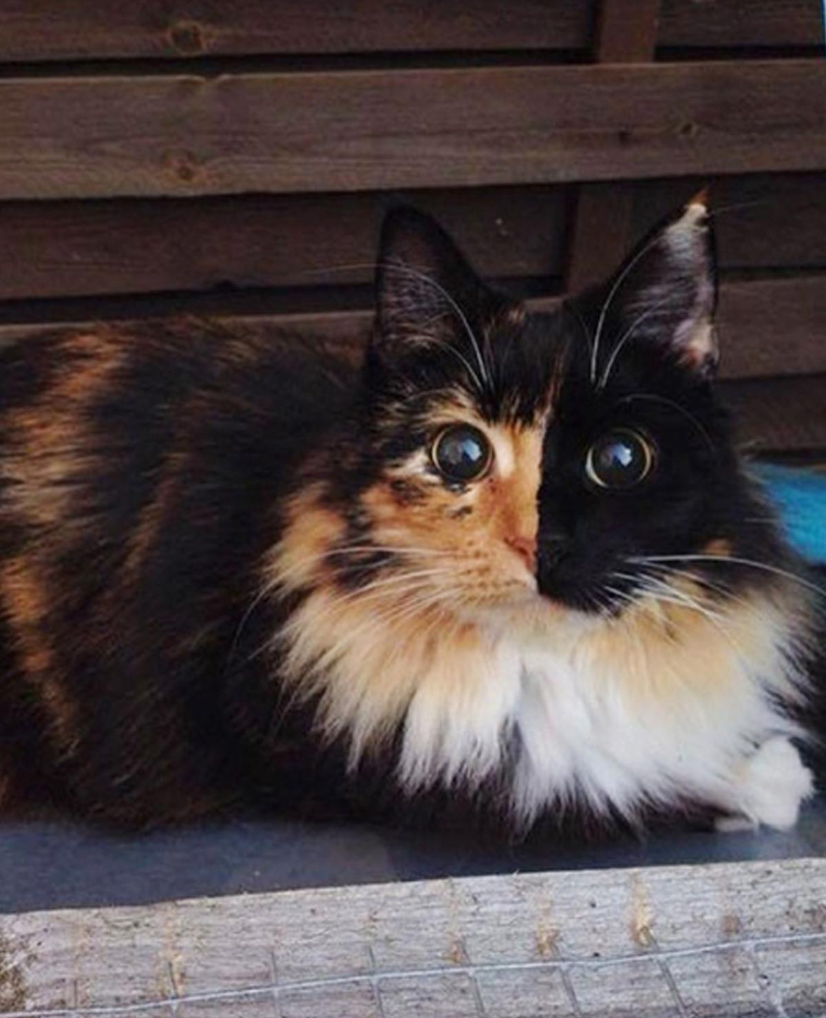 De ogen van deze blinde kat zijn zó betoverend