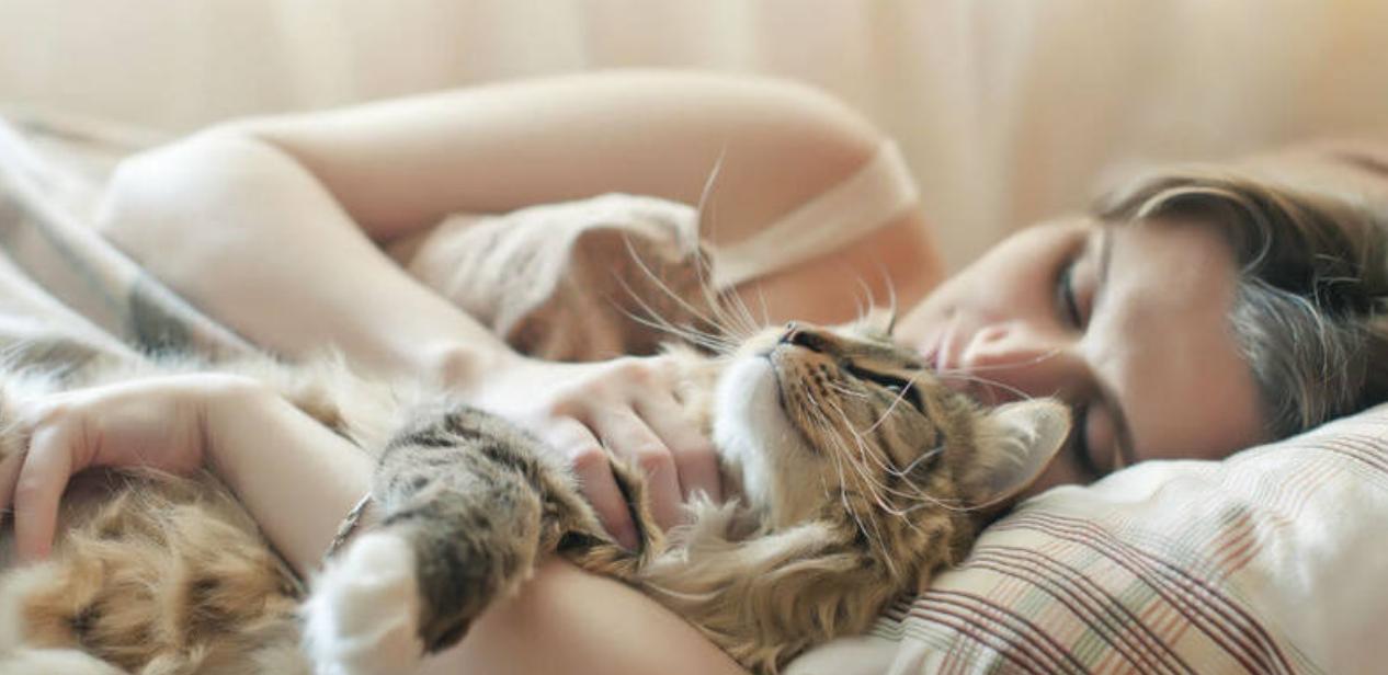 Vacature: word fulltime kattenknuffelaar en verdien 25 duizend euro per jaar
