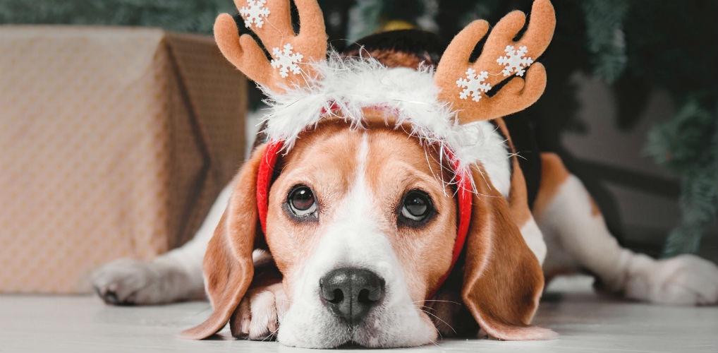 Voor iedereen feest: dit merk komt met kerstmaaltijden voor je hond