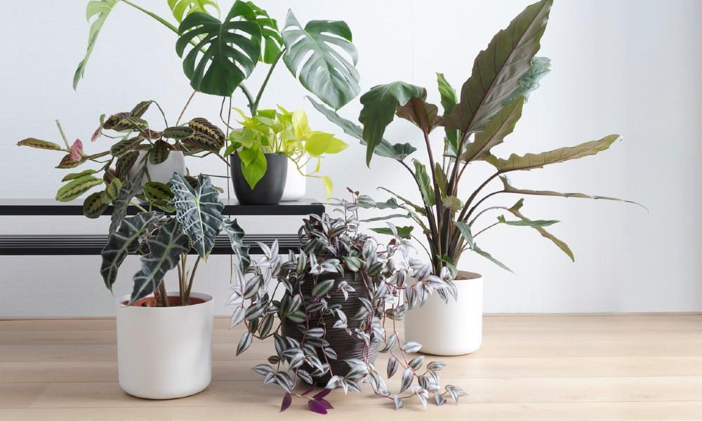 Waarom een ui misschien wel dé redding is voor je planten